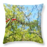 Bromeliad Growing In The Wild Throw Pillow