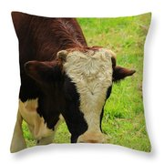 Brown And White Bull On A Farm Throw Pillow