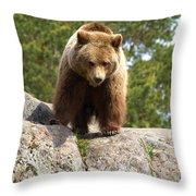 Brown Bear 3  Throw Pillow