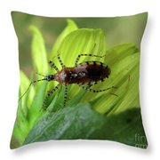 Brown Insect Throw Pillow