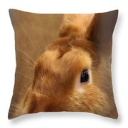 Brown Bunny And Whisker's Closeup Throw Pillow