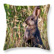 Brown Bunny Throw Pillow