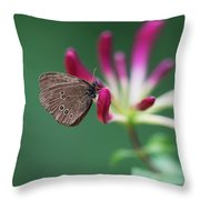 Brown Butterfly Resting On The Pink Plant Throw Pillow