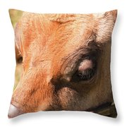 Brown Cow 2 Throw Pillow