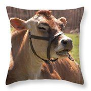Brown Cow Chewing Throw Pillow