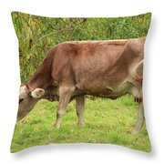 Brown Cow Grazing Throw Pillow