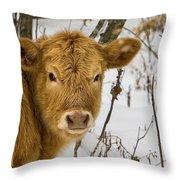 Brown Cow Throw Pillow by Ken Barrett