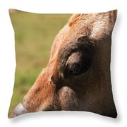 Brown Cow With Vignette Throw Pillow