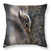 Brown Creeper  Throw Pillow