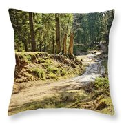 Brown Dirty Road Under Spring Sun Rays Throw Pillow