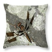 Brown Dragonfly  Throw Pillow