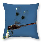 Brown Dragonfly Hanging On Throw Pillow