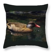 Brown Duck Throw Pillow