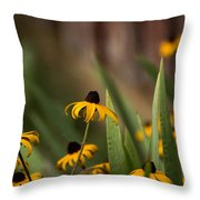 Brown Eed Susans By Red Bard Throw Pillow