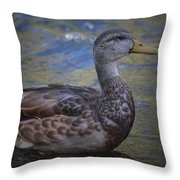 Brown Feathered Girl Throw Pillow