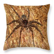 Brown Fishing Spider Throw Pillow