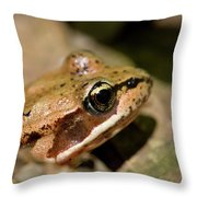 Brown Frog In The Forest - Western Oregon Throw Pillow