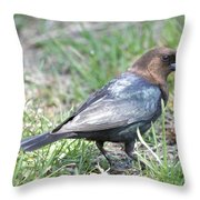 Brown-headed Cowbird 2 Throw Pillow