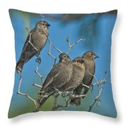 Brown-headed Cowbirds Throw Pillow