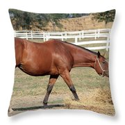Brown Horse Eating Hay Ranch Scene Throw Pillow