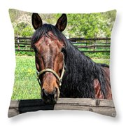 Brown Horse In A Corral Throw Pillow