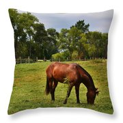 Brown Horse In Holland Throw Pillow