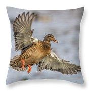 Brown Mallard Landing Throw Pillow
