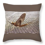 Brown Mayfly On Screening    Spring      Indiana Throw Pillow