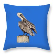 Brown Pelican - Preening - Transparent Throw Pillow