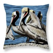 Brown Pelicans Preening Throw Pillow