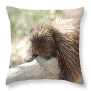 Brown Porcupine On A Fallen Log Throw Pillow