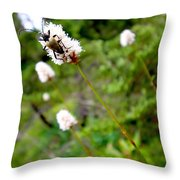 Brown Spruce Longhorn Beetle Two Throw Pillow