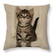 Brown Tabby Straight Ear Throw Pillow by Robert Morin