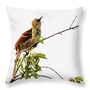 Brown Thrasher - I Am Here Throw Pillow