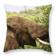 Browsing Elephant Throw Pillow