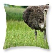 Browsing Ostrich Throw Pillow
