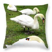 Bruges Swans 2 Throw Pillow