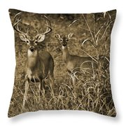 Buck And Doe In Sepia Throw Pillow