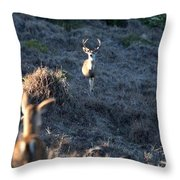 Buck And Does Throw Pillow