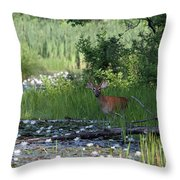 Buck In Pond Throw Pillow