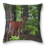Buck In Velvet Throw Pillow