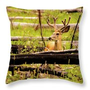 Buck In Velvet Throw Pillow