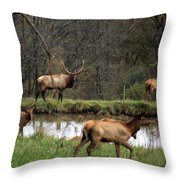 Buck In Wilderness Throw Pillow