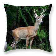 Buck Throw Pillow