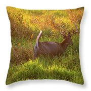 Buck On The Run  Throw Pillow