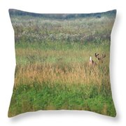 Buck Running In Field Throw Pillow