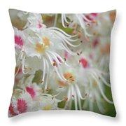 Ohio Buckeye Blooms Throw Pillow