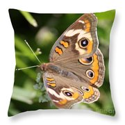 Buckeye Butterfly Square Throw Pillow