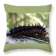 Buckeye Caterpillar Throw Pillow
