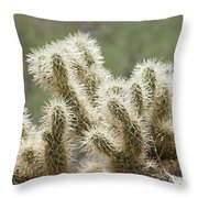 Buckhorn Cholla Throw Pillow